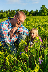 A man and his young daughter stop to look at ferns and blue flag iris in a field in Epping, New Hampshire.
