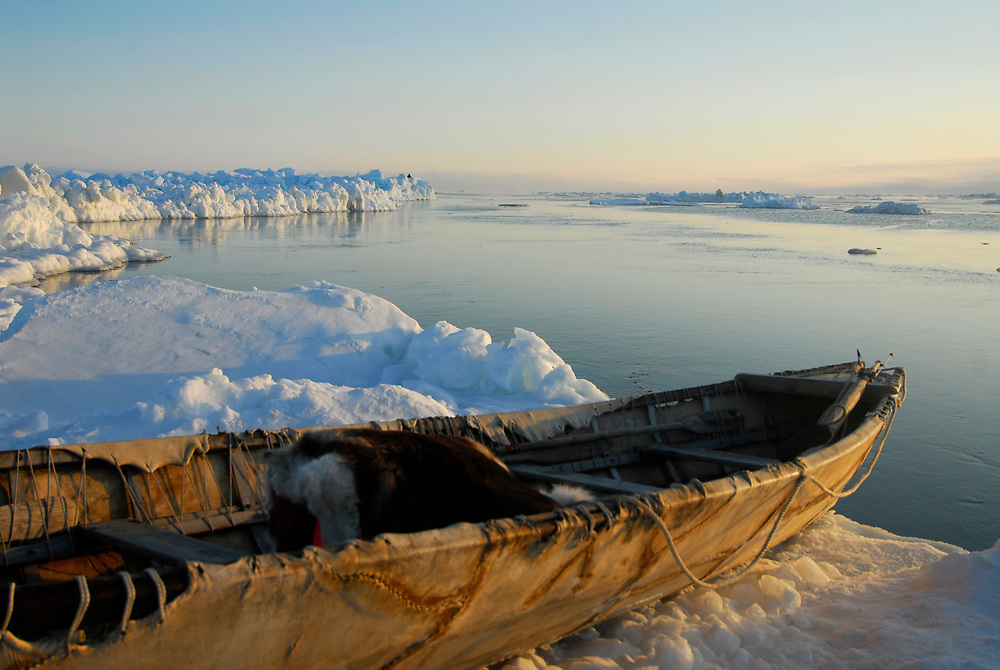 Alaska, Barrow. The umiaq or skin boat on the edge of the Arctic ocean. The red float is covered with an animal skin so the whale will not see the color red. (Model Release)