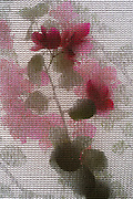 Abstract rose flower. A rose flower and branch photographed through a woven fabric mesh