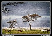 Animals at the waters edge.Lake Nakuru, Kenya.September 2012