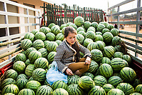 A young girl sells watermelons at an early morning market in Khon Kahndone Village, Xieng Khouang province, Laos.