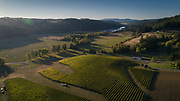 Aerial view over Beacon Hill Vineyard during wine harvest, Yamhill-Carlton AVA, Willamette Valley, Oregon