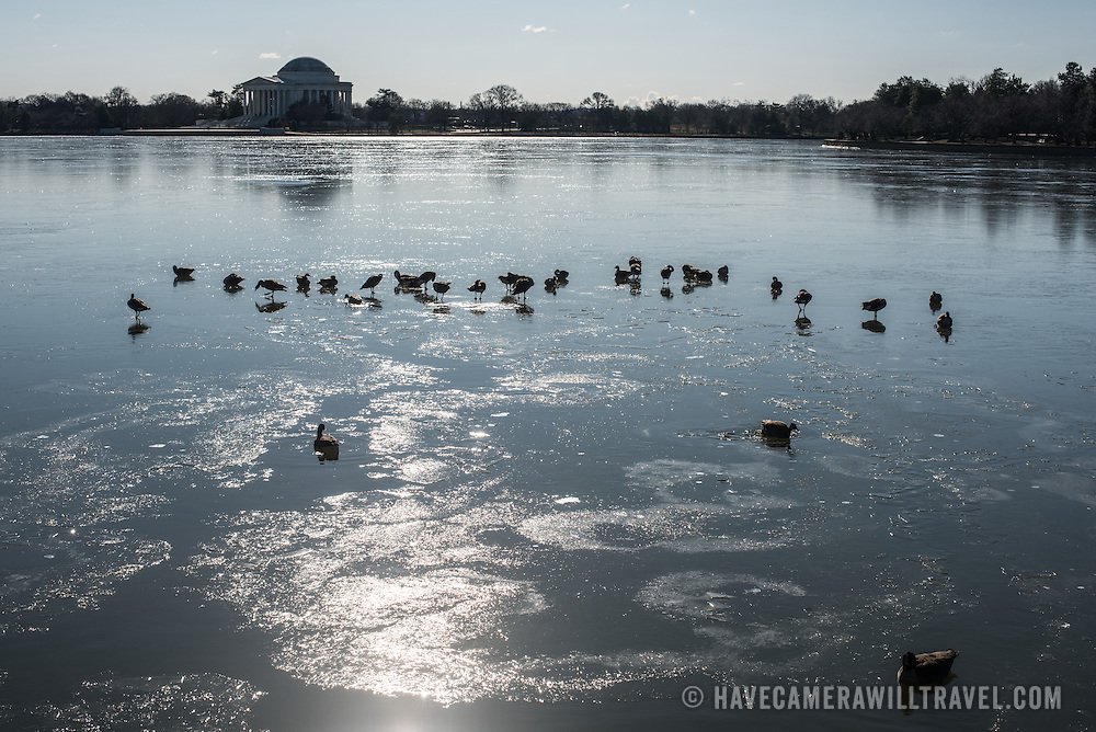Washington DC's cherry blossoms and the area around the Tidal Basin on an especially cold morning on February 14, 2016.
