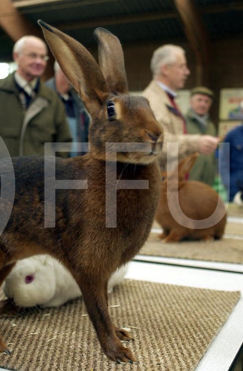 fotografie frank uijlenbroek©2003 michiel van de velde.031009 hardenberg ned.Kleindierententoonstelling in manege het Gulden Spoor.