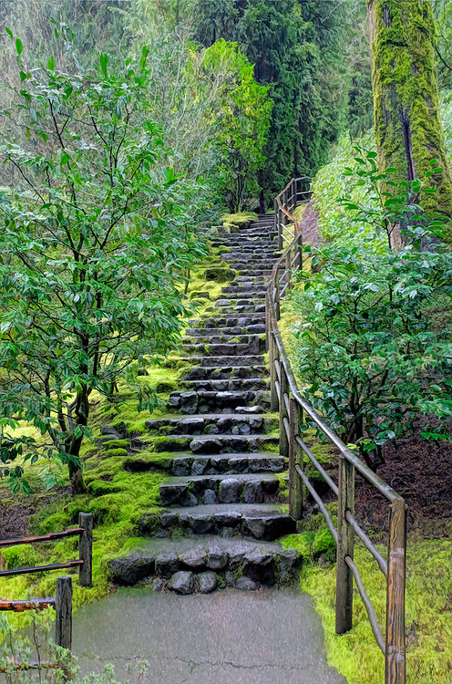 A stone stairway with a wooden rail leading up a hill, surrounded by lush trees and green moss.