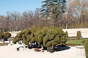 Cloud Prune Trees at Retiro Park, Madrid, Spain