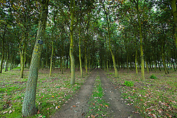 © Licensed to London News Pictures. 17/10/2016. Alrewas  Staffordshire England  <br /> The Arboretum is a unique haven of peace, contemplation and hope for the future. It consists of 150 acres of wooded parkland within the National Forest in Staffordshire where visitors can both enjoy and learn about the trees and their surroundings, and reflect upon their special symbolism.<br /> Rob Leyland/LNP