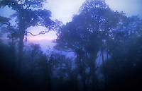 Dawn over the Malaysian rainforest<br />