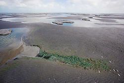 An algal bloom on Eighty Mile Beach south of Broome at low tide.