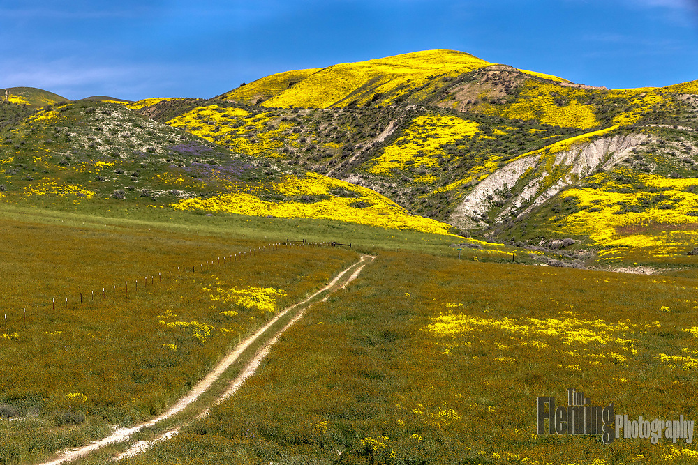 In the Carrizo Plain National Monument, California