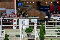 097, Kiss And Jump Tag Z<br /> BWP Hengstenkeuring -  Lier 2020<br /> © Hippo Foto - Dirk Caremans<br />  18/01/2020