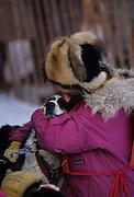 Roxy Wright-Champaign, Dog musher, Dogs, Sled Dogs, Dog sled, Dog Sledding, mushing, Anchorage, Alaska