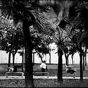 DAILY VENEZUELA / VENEZUELA COTIDIANA.Los Caobos Park / Parque Los Caobos, Caracas - Venezuela 2008.(Copyright © Aaron Sosa)