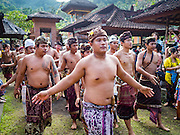 22 JULY 2016 - TENGANAN DUAH TUKAD, BALI, INDONESIA: The victors in the pandanus fights enter the village temple after the pandanus fights in the Tenganan Duah Tukad village on Bali. The ritual Pandanus fights are dedicated to Hindu Lord Indra. Men engage in ritual combat with spiky pandanus leaves and rattan shields. They usually end up leaving bloody scratches on the combatants' backs. The young girls from the community wear their best outfits to watch the fights. The fights have been traced to traditional Balinese beliefs from the 14th century CE. The fights are annual events in the Balinese year, which is 210 days long, or about every seven months in the Gregorian calendar.    PHOTO BY JACK KURTZ