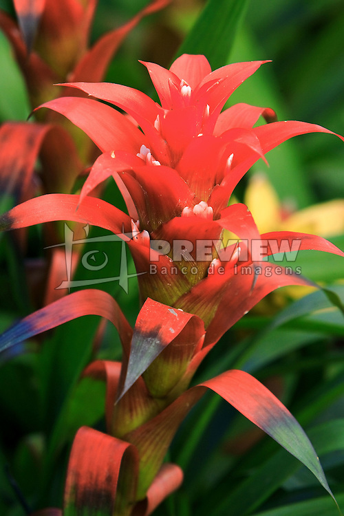 Flor - Bromelia. FOTO: Jefferson Bernardes/Preview.com