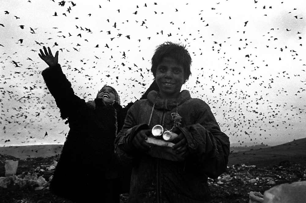 Title: Thousands of crows take flight as last light indicates the end of another working day. Pata-Rât Transylvania, Romania. August 1996..Gypsy children scavenge on the rubbish dump at the Roma community of Pata-Rat, Transylvania, Romania...