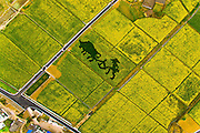 YICHANG, CHINA - MARCH 15: (CHINA OUT) <br /> <br /> Aerial view image shows rape flowers blossom in large areas in Wuyi District on March 15, 2016 in Yichang, Hubei Province of China. The blooming rape flowers indicate the upcoming spring. <br /> ©Exclusivepix Media