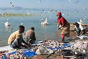 Fishermen on lake Awasa, Ethiopia,Africa