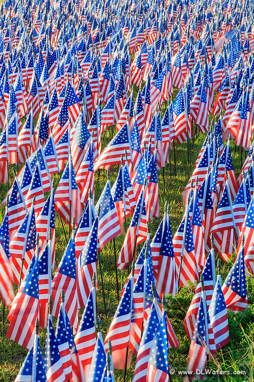American flags commemorate the 9/11 anniversary.