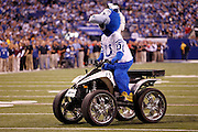 The Indianapolis Colts mascot rides around the field during the NFL week 8 football game against the Houston Texans on Monday, November 1, 2010 in Indianapolis, Indiana. The Colts won the game 30-17. ©Paul Anthony Spinelli
