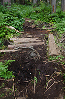 Assorted logs and branches spanning muddy section of trail into Marriott Basin, Coast Mountains British Columbia