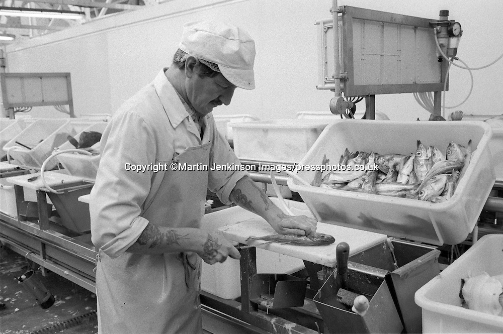 Fish Filleter, Bluecrest Foods, Grimsby.
