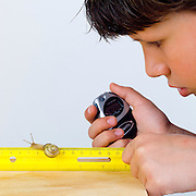 Boy using two measurement tools, a ruler and a timer, to measure the distance the snail travels and the time it takes for the snail to travel.