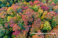 64776-02109 Aerial view of Hugoboom Lake in fall color Alger Co. MI