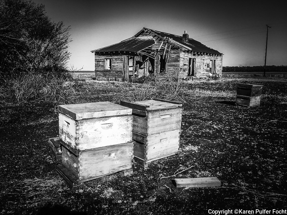 Bee hives near an abandoned share cropper shack in Eastern Arkansas.