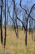 le Tavy est une culture de riz sur Brulis qui participe beaucoup  à la déforestation et à l'érosion des sols