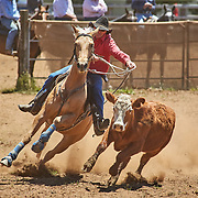 2018-11 Ebor Campdraft, NSW