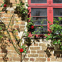 Wild Roses Growing on Window in Rostock, Germany <br />