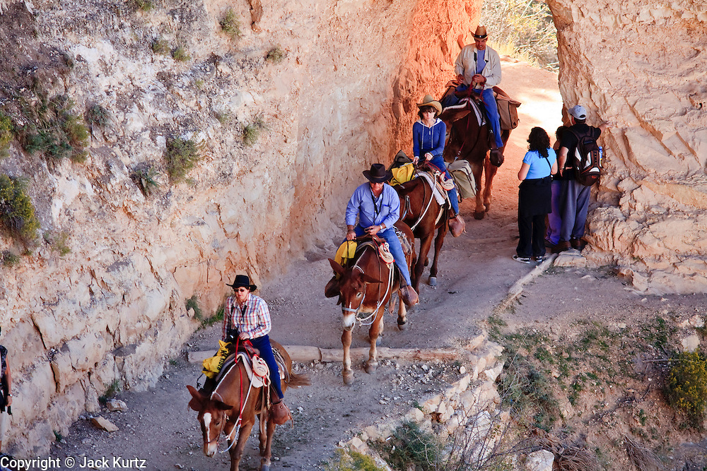 Oct. 7, 2008 -- GRAND CANYON NATIONAL PARK: Tourists ride out the Bright Angel trail at the end of their trail ride in the Grand Canyon National Park in northern Arizona. Photo by Jack Kurtz