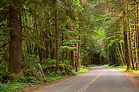 The road to the Hoh Rain Forest in Olympic National Park, Washington, USA