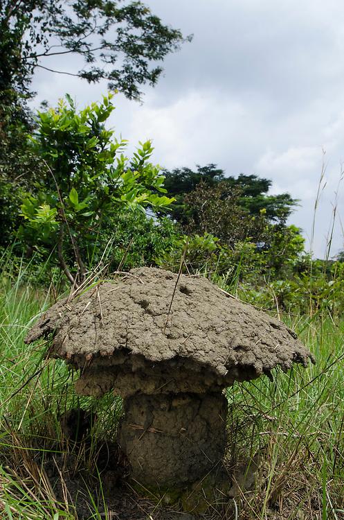 Umbrella termite mounds<br /> Odzala - Kokoua National Park<br /> Republic of Congo (Congo - Brazzaville)<br /> AFRICA