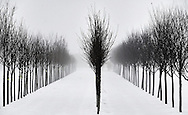 Manorville, NY, February 21, 2014: --  Trees in a nursery seem so isolated on a foggy day. ©Audrey C. Tiernan