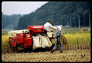 Man harvests rice on tiny combine as woman in scarf walks along with sickle; October, Utsunomiya Japan