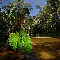 Rio del pueblo de Birongo, ubicado entre las poblaciones de Curiepe y Capaya, en la porción centro-norte de Venezuela. Jimmy Villalta
