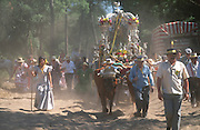 """Arriving in the dust near El Rocio after a weeks march. The pilgrim route of the Hermandade de Sanlucar de Barrameda from Sanlucar across the Parque Donana to El Rocio, Huelva Province, Andalusia, Spain...El Rocio follows on from Semana Santa - Easter week and the various spring ferias, of which Seville's Feria de Abril (April) is the biggest. The processions to the (Hermitage) Hermita de El Rocío, at Pentecost, is the most famous (Romeria) pilgrimage in the Andalusian region, attracting nearly a million people from across Andalusia, Spain and the world. The cult started off in the 13th century when a statue of the virgin Mary was apparently found in a tree trunk in the Donana Park. What was first a local devotion at Pentecost by local pilgrim brotherhoods """"hermandades"""" became by the 19th century into dozens of fraternities developed from such as Cadiz, Selville and Huelva. Some walk for several days, others travel with oxen drawn wagons or on horseback, with traction engines and all terrain vehicles, camping along the trail they take. They wear Andalusian costumes, tight breeches, boots, short jackets and frilly flamenco skirts. Many festivities, flamenco dance, laments, songs and music are combined with religious prayers. Devout pilgrims walk as a penance, keeping vows of silence. An emblem of the immaculate conception (sin peche) is carried. On the Pentecost after the stroke of midnight on the whit Sunday the virgin Mary is carried from the church through the streets of El Rocio by each hermandade to visit each brotherhood's shrine."""