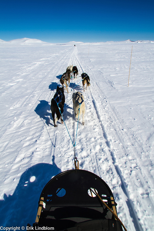 Sled dogs pulling me and a friend across the large expanses in Jotunheimen, Norway.