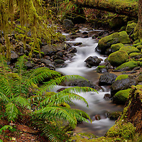 "Small Creek on the ""Wet"" side of the Cascade Mountains"