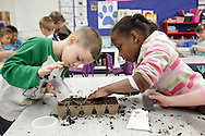 Kindergarten students Isaiah Roldan, left, and Josalyn Colon prepare a container with dirt before planting vegetable seeds at George L. Cooke Elementary School in Monticello on Monday, May 13, 2013. The garden is a STEM (Science, Technology, Engineering and Math) project that the entire school is doing.