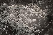 Black & White photographs from Sri Lanka<br /> <br /> Horton Plains NP. Montane forest.