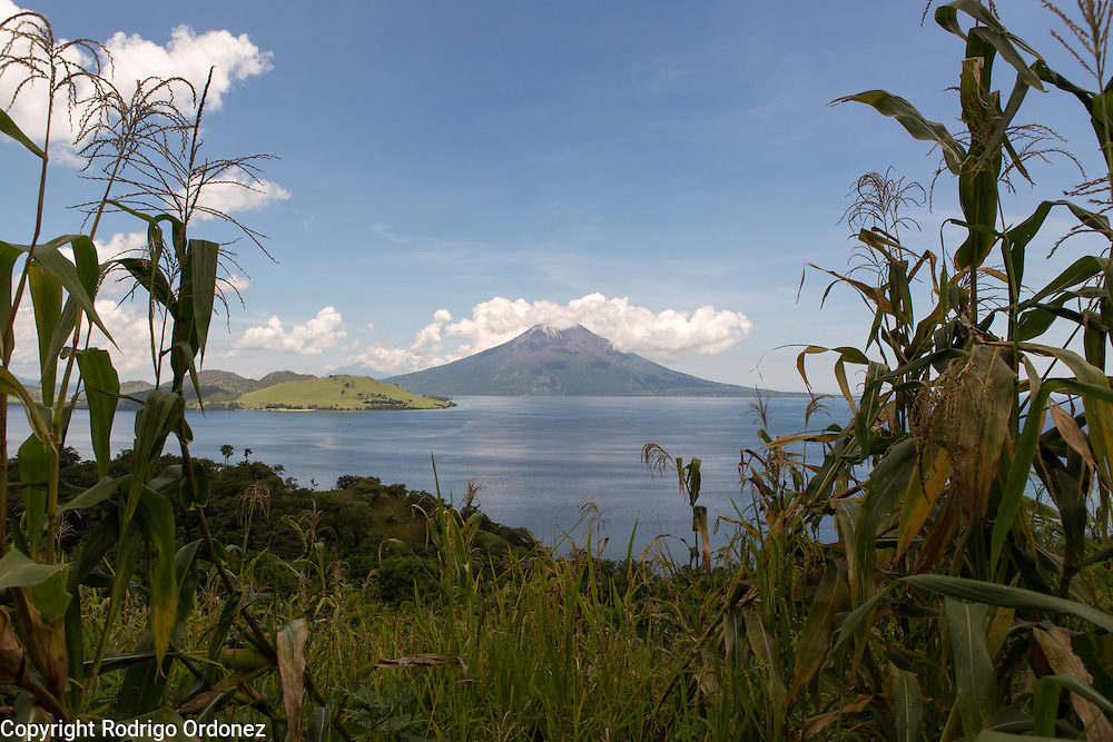 Lewotolo Mountain can be seen through maize plants growing on the roadside. Lewotolo Mountain is an active volcano in the central part of Lembata island, East Nusa Tenggara province, Indonesia.