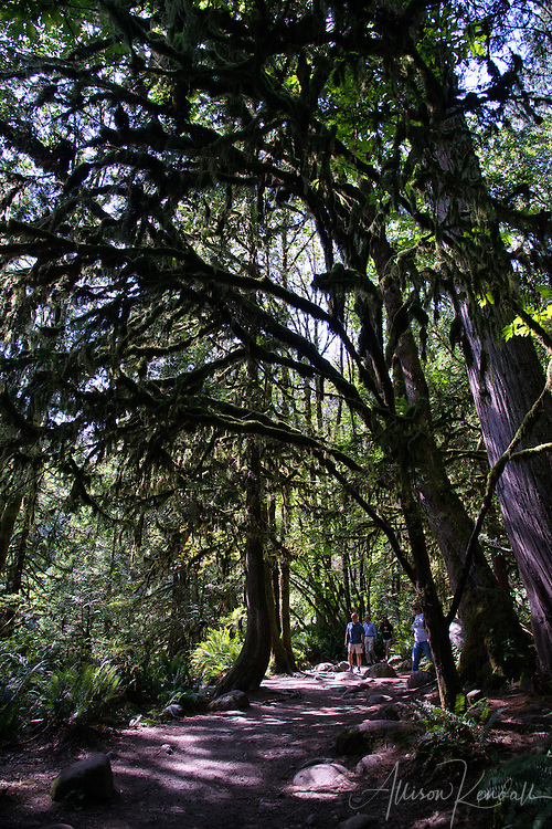A walk through the forest of Lynn Canyon Park, just outside of Vancouver, British Columbia