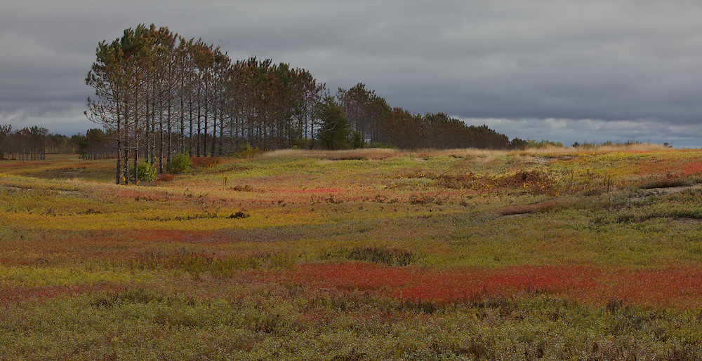 Blueberry fields near Cherryfield, MaineBlueberry Barrens near Franklin, Maine