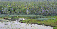 Paperbark forest and wetland at Eubenangee Swamp National Park, Queensland, Australia