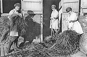 Holding the Home Front<br /> The Women&rsquo;s Land Army in the First World War book by Pen and sward<br /> <br /> Within days of the start of the First World War there were calls for women to come to the fields, but it would be almost three years before the Women&rsquo;s Land Army was established. In that time though, various private and public initiatives would be launched to pull women onto the land. The Women&rsquo;s Land Army would be shaped as much by the successes and failures of these earlier enterprises as by the precise requirements of 1917. It was a process of evolution, not revolution, and agricultural policy had also evolved over the course of the first three years of the war. By the spring of 1917 farmers were being called upon to plough out, to push back the borders and extend the cultivated acreage back to the highs of the 1870s. Agriculture would thus need most labour just as it had least available. Britain&rsquo;s food security had never looked most precarious than it did at the start of 1917.<br /> <br /> Photo Shows: &lsquo;Women&rsquo;s War-Work on a Royal Farm&rsquo;. Miss Hilda Hobson, Miss Marjorie Maxfield and Miss Phyllis Hobson, workers on the Sandringham estate. Illustrated War News, 8 November, 1916.<br /> &copy;Pen and sward/Exclusivepix Media