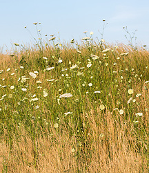 field of wildflowers in The Hamptons