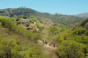 Horseback riding in Topanga Canyon